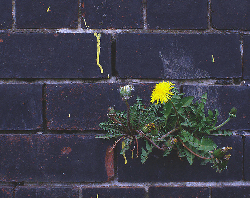 flower growing through a wall